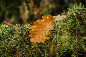 pianta di rosmarino in autunno