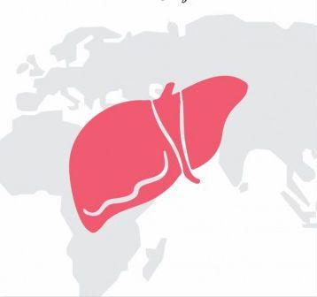 importanza del fegato