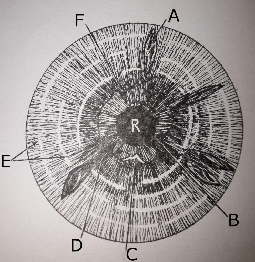 mappa intestinale iride destra