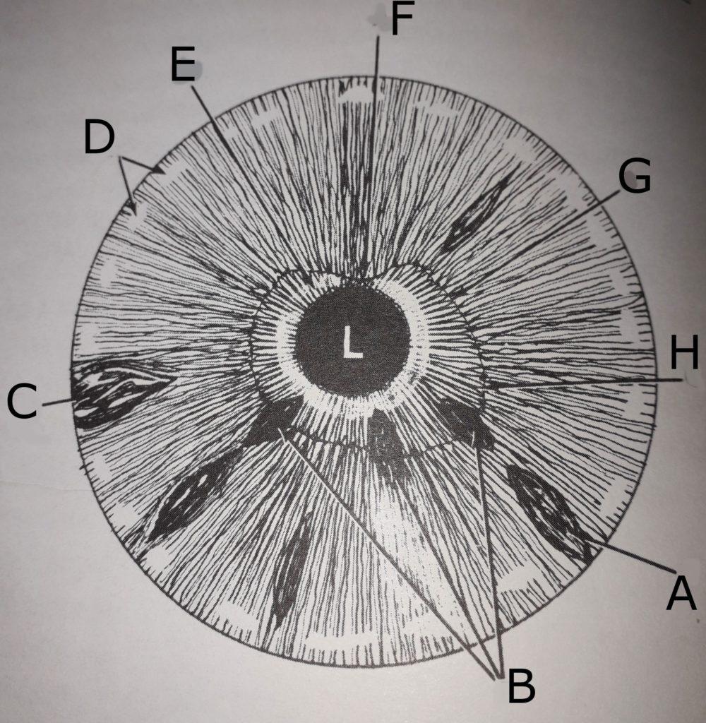 mappa intestinale iride sinistra