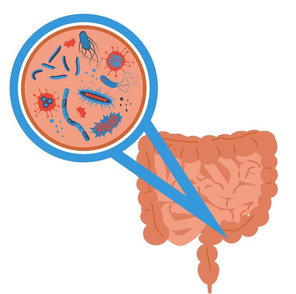 funghi dell'intestino